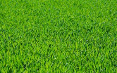 Les 6 astuces pour entretenir votre pelouse pendant l'été